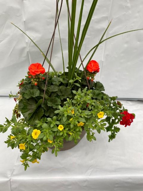 13 Orange Geranium Mix Small