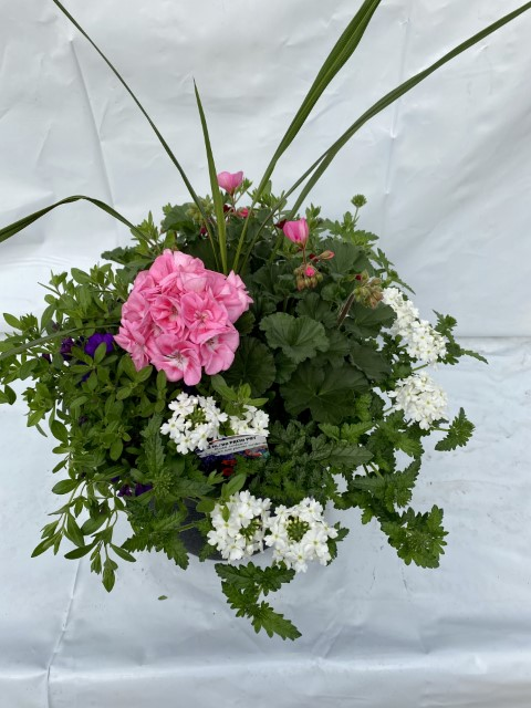 Light Pink Geranium 13 Planter Small