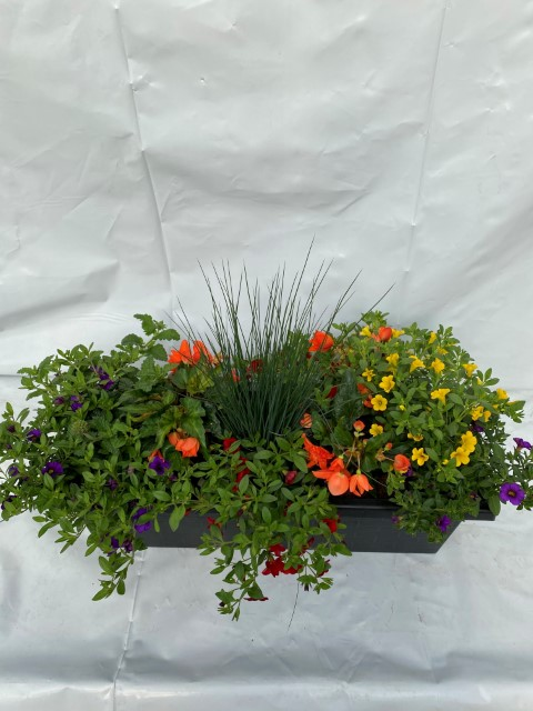 Orange Begonia Mix Small