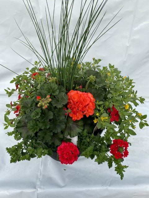 Orange Geranium 13 Planter Small
