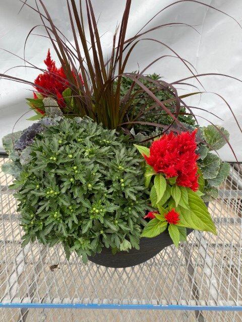 Red Celosia Planter Small