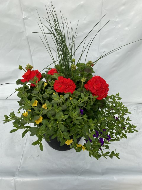 Red Geranium 13 Planter Small